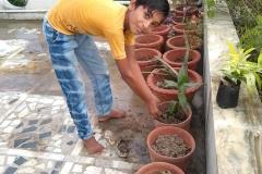 plantation-img3